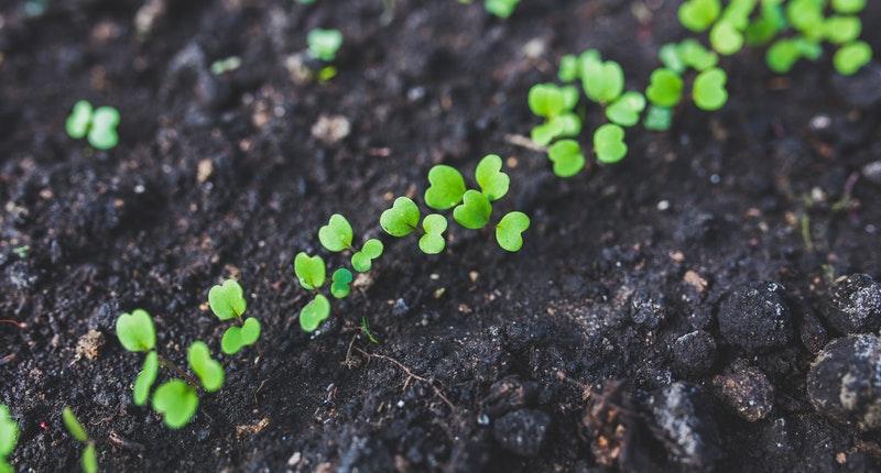 La jardinería puede alargar tu vida